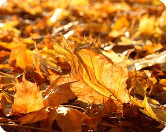 Вывоз листвы или переработка?